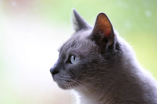猫アクセサリー 猫ジュエリー